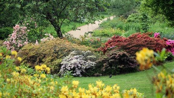 Verschiedene Rhododendren mit Wiese und Parkweg in Savill Garden in Windsor