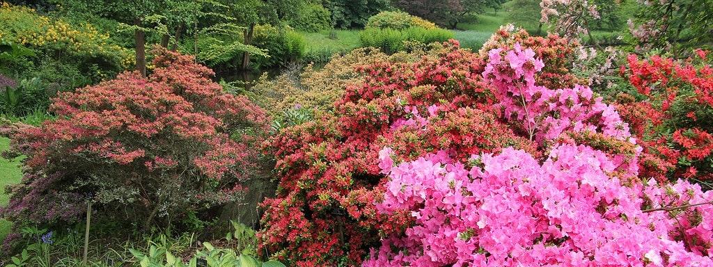 Top Rhododendron richtig pflanzen und pflegen | MDR.DE &YJ_18
