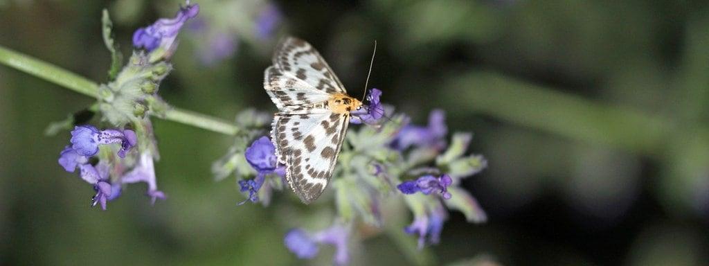 Falter Pflanzen Auf Diese Blüten Fliegen Schmetterlinge Mdrde