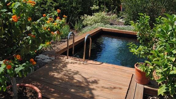 Ein rechteckiges Becken mit Wasser zum Baden und einer Umrandung aus Holz in einem Garten mit Blumen und Gehölzen