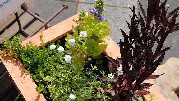 Mini-Teich im Holzkasten mit Ufer- und Sumpfpflanzen