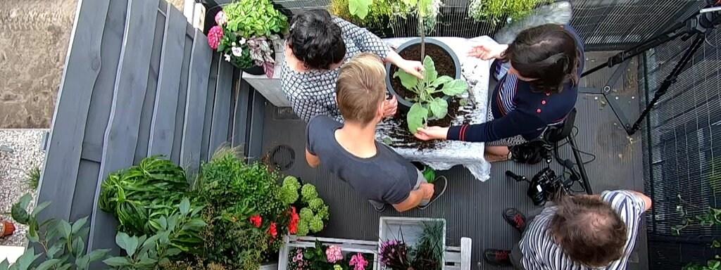 Naschobst Und Essbare Blüten Vom Balkon Mdrde