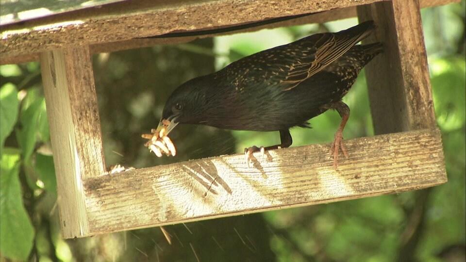 Garten für Vögel: Füttern auch im Sommer sinnvoll | MDR.DE