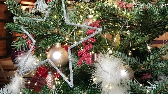 Federschmuck wurde auf Zweige des Weihnachtsbaumes gelegt.