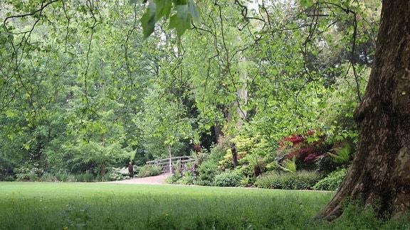 Wiese mit Bäumen, Pflanzen Rabatten und einer Brücke im Worcester Collage Garden in Oxford.