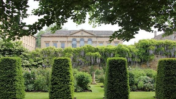 Hecken mit Formschnitt und Blauregen im Provost's Garden im Worcester Collage Garden in Oxford.