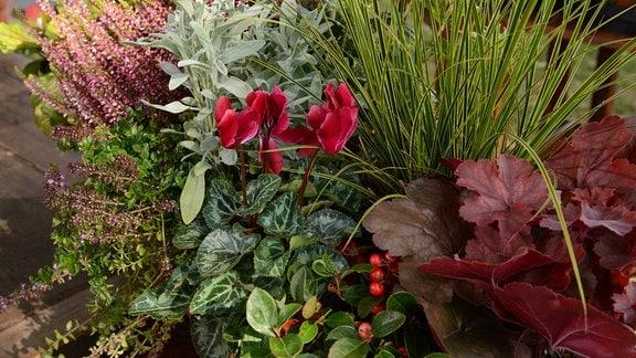 Ein Blumenkasten mit verschiedenen Stauden für die Herbstsaison.