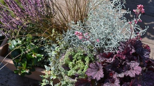 Außergewöhnlich Gräser und Blumen für die Herbstbepflanzung | MDR.DE &EW_11