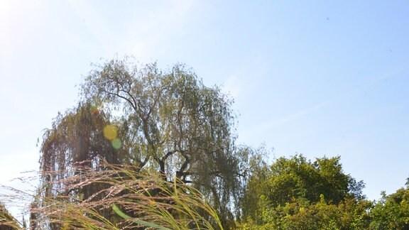 Heller großer Blumentopf mit verschiedenen Pflanzen: Hortensie, Rutenhirse, Herbstanemone
