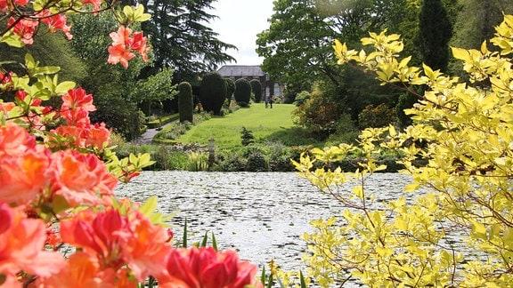 Blick durch blühende Sträucher über einen See in einen Park.