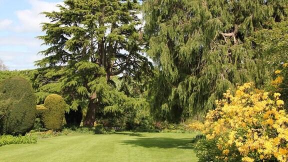 Blick in einen Park mit hohen Bäumen und blühenden Sträuchern.