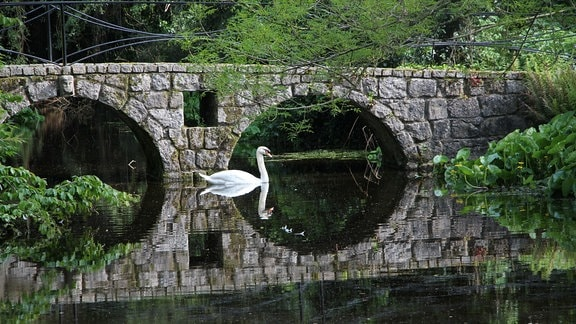 Auf einem See schwimmt ein Schwan vor einer Steinbrücke mit zwei Bögen.