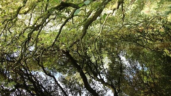 Äste eines Baumes spiegeln sich in einem See.