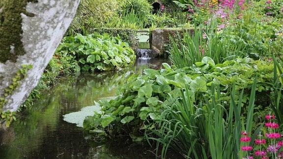 Teich mit vielen Wasserpflanzen