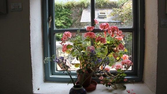 Blick durch ein Fenster auf ein Haus. Auf dem Fensterbrett stehen Blumentöpfe.