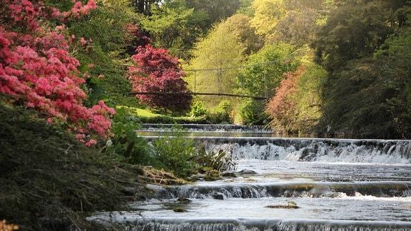In einem Fluss wurden viele stufenförmige Wasserfälle angelegt. Am Rad der Flussbettes wachsen Strächer mit roten Blüten.