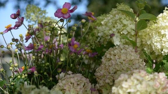 eine weiße Rispenhortensienblüte und eine rosa Anemone.