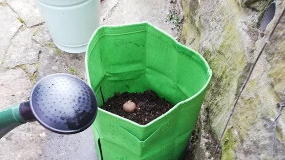 Kartoffeln in einem Pflanzsack