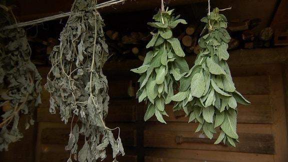 Kräuter als kleine Sträuße zum trocknen unter einem Dach aufgehangen