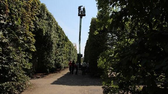 Zwischen riesigen Hecken wurde eine Hebebühne hochgefahren auf der ein Kamera-Team arbeitet.