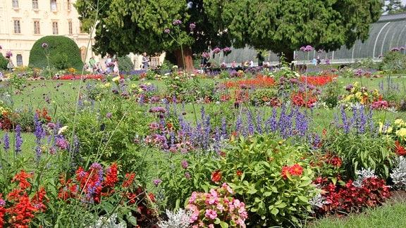 Beet mit vielen verschiedenen Blumen
