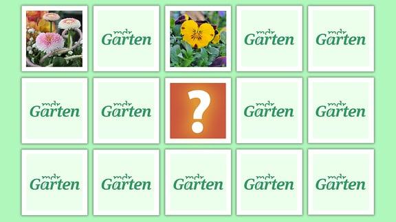 Legespiel Frühblüher beim MDR Garten