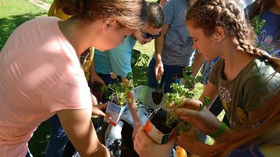 Kinder bepflanzen verschiedene Dinge, zum Beispiel viele Tetrapacks.