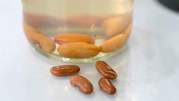 Mehrere dicke, aufgequollene Bohnensamen liegen in einem Glas mit Wasser. Vor dem Glas auf dem Tisch liegen viel kleinere Samen, die noch nicht behandelt wurden.
