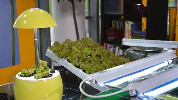 Auf einem Tisch stehen ein Spezialblumentopf mit Lampe, Gewächshäuser, und Jungpflanzen in einer Palette.