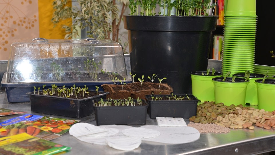 gem sepflanzen f r topf und k bel g rtnern auf dem balkon mdr de. Black Bedroom Furniture Sets. Home Design Ideas
