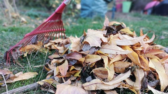 Mit einem Laubrechen werden Blätter zusammengekehrt.