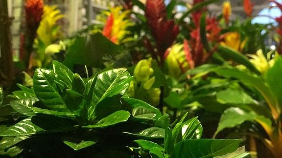 Viele Zimmerpflanzen