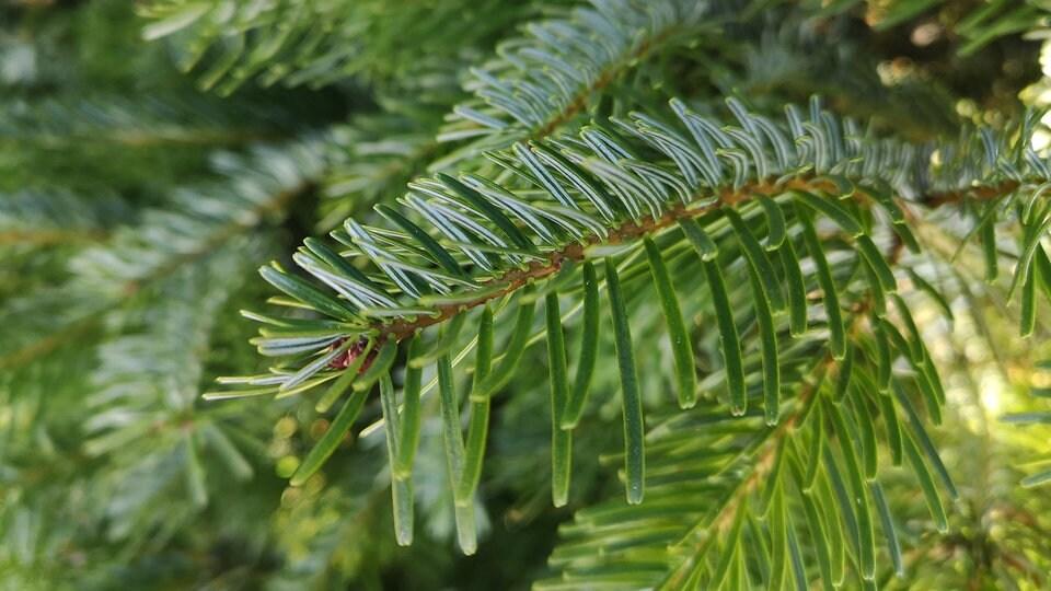 Weihnachtsbaum quiz