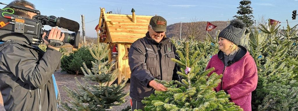Weihnachtsbaum Herkunft.Tipps Für Den Weihnachtsbaumkauf Mdr De