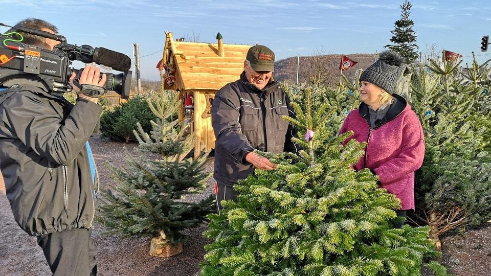 Bis Wann Bleibt Der Weihnachtsbaum Stehen.Tipps Für Den Weihnachtsbaumkauf Mdr De