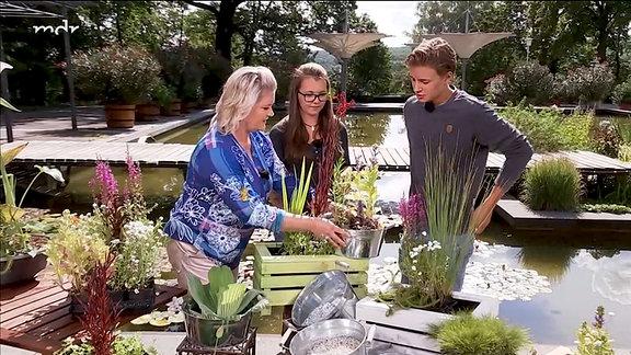 Diana Fritzsche-Grimmig im Gespräch über Miniteiche und Wasserpflanzen