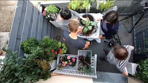 MDR Garten - Balkonien