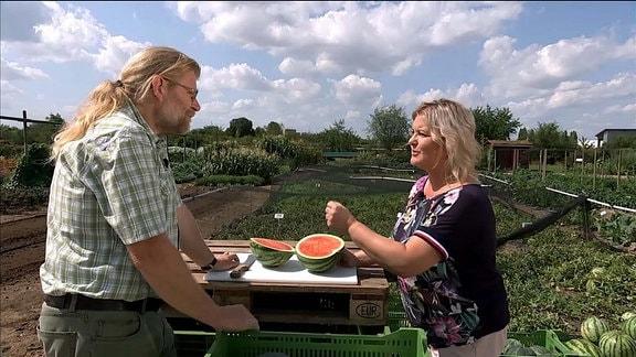 MDR Garten - Gespräch Melonen - Krumbein