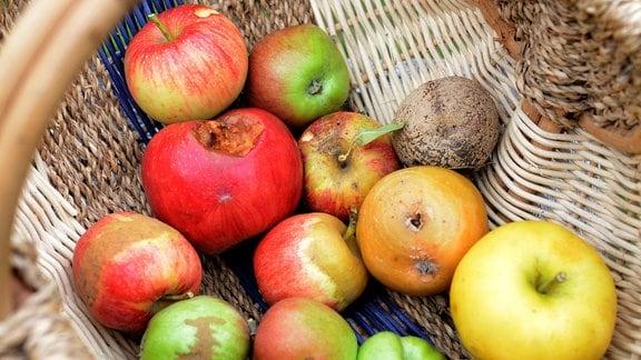 Äpfel mit verschiedenen Schadbildern liegen in einem Korb