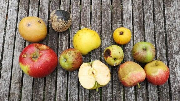 Äpfel mit verschiedenen Schadbildern liegen auf einem Tisch