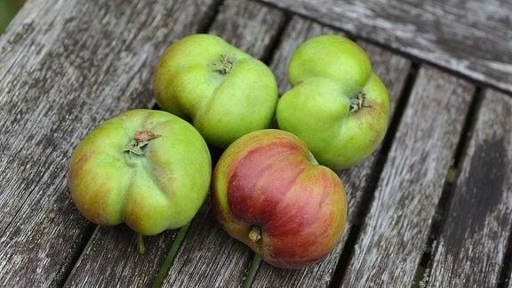 verbeulte Äpfel