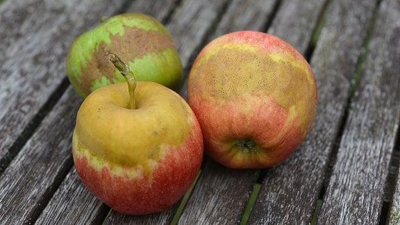 Äpfel mit typischen Frostringen