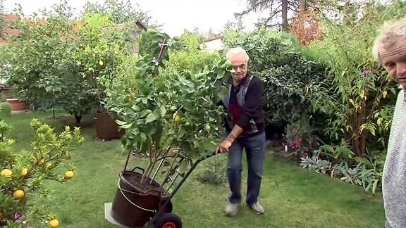 Peter Mitdank bringt die Kübelpflanzen in Sicherheit