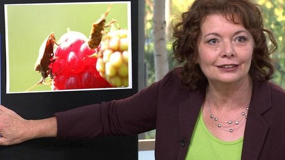 Gärtnerin Brigitte Goss steht im Studio vor einer Tafel mit dem Bild einer Wanze.