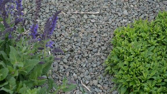 Graue Steine liegen dicht um eine Pflanze in einem Beet.