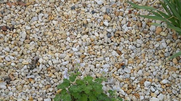 Helle Steine liegen um Pflanzen in einem Beet