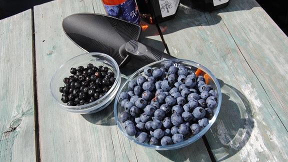 Zwei unterschiedlich große Glasschälchen, die mit kleinen, schwarzen sowie mit größeren, blauen Heidelbeeren gefüllt sind, stehen auf einem Holztisch neben einer kleinen Schaufel aus schwarzem Kunststoff