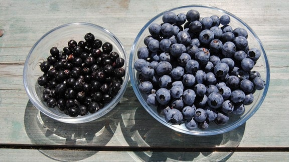 Zwei unterschiedlich große Glasschälchen, die mit kleinen, schwarzen sowie mit größeren, blauen Heidelbeeren gefüllt sind, stehen auf einem Holztisch