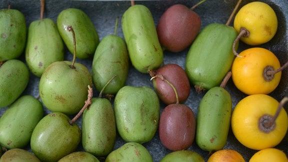 Grüne, olivfarbene und gelbe kleine Kiwibeeren.