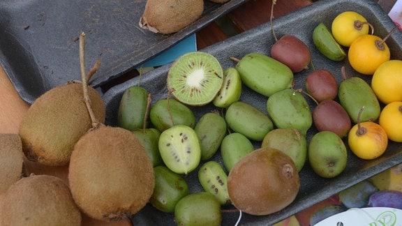 Traube mit auberginefarbenen Kiwibeeren.